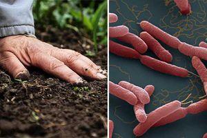 Ba đứa trẻ trong gia đình tử vong do Whitmore: Ai có thể nhiễm vi khuẩn này?