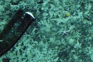 Giun săn mồi 'vô hình' dài 3m tìm thấy dưới lớp băng ở Nam Cực
