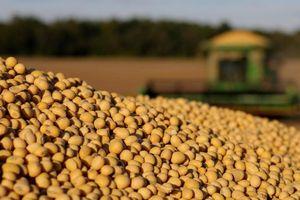 Giá ngô và đậu tương giảm trước biến động về thỏa thuận thương mại Mỹ - Trung