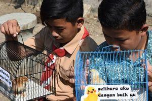 Sử dụng hơn 2.000 'chiến binh' gà con giúp học sinh 'cai nghiện' smartphone