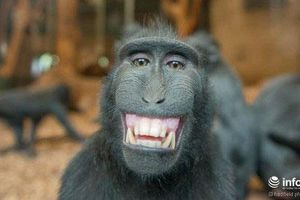 Những con vật nhìn là thấy 'buồn cười'