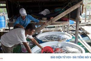 Nuôi trồng thủy sản đã trở thành ngành mũi nhọn của xã đảo Hòn Nghệ