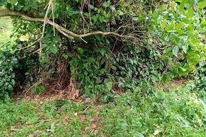 Bình Phước: Phát hiện thi thể không đầu, đang phân hủy trong vườn điều