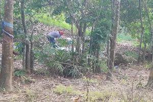Thấy phần đầu nạn nhân trong vụ phát hiện nửa thi thể ở Bình Phước