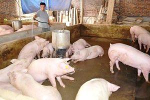 Đại diện Bộ Nông nghiệp buồn khi có người nói ngành chăn nuôi bị 'vỡ trận'