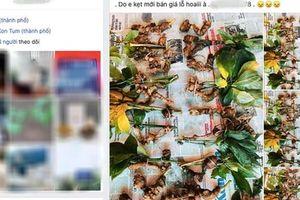'Quốc bảo' Sâm Ngọc Linh thành hàng chợ, bán đầy trên mạng xã hội