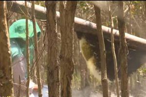 Kiên Giang: Thu nhập hàng trăm triệu từ nghề gác kèo ong