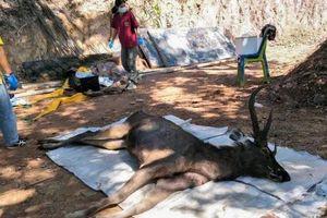 Hươu chết ở Thái Lan do nuốt phải 7 kg rác thải nhựa