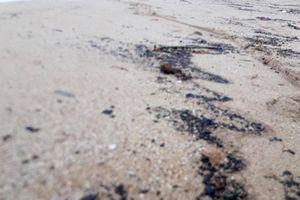 Xác định nguồn gốc vệt đen kéo dài 3km ở vùng biển Hà Tĩnh