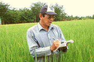 Hành trình 25 năm tạo ra hạt gạo ngon nhất thế giới