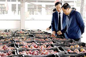 Việt Nam xuất siêu 9,1 tỷ USD: Thị trường Mỹ tăng mạnh, EU và Trung Quốc giảm nhẹ