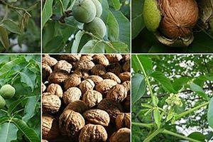Sức mạnh trị liệu của cây cối
