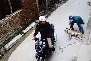 Tên trộm chó nhảy xuống ao khi gặp cảnh sát giao thông
