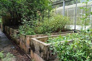 Bắc Kạn tiếp thu phản ánh tình trạng lãng phí các vườn ươm cây giống