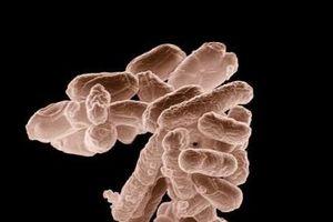 Phát triển thành công loại vi khuẩn hấp thụ khí CO2, giúp giảm khí thải nhà kính