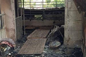 Cháy nhà, 3 bà cháu chết thảm: Tiếng kêu cứu 'chập điện rồi, cứu tôi với' trong căn nhà khóa trái