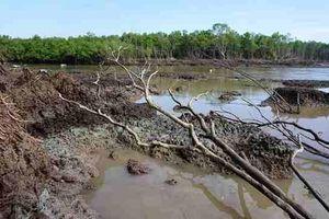 Cà Mau chỉ đạo kiểm tra vụ chặt phá rừng phòng hộ