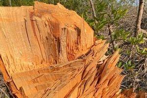 Chủ tịch tỉnh Cà Mau chỉ đạo kiểm tra thông tin 'rừng phòng hộ bị chặt phá nghiêm trọng'