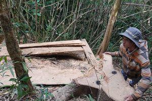 Điều tra mở rộng vụ chặt phá hàng loạt cây gỗ trăm tuổi ở rừng đặc dụng Nam Kar