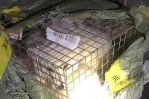 Cứu 6 con cáo quý hiếm đang trên đường đi tiêu thụ