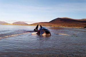 Scotland: Kinh hoàng thấy cá chết với một núi rác trong bụng