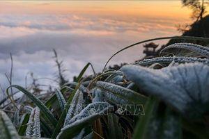 Lạnh dưới 0 độ C, sương muối phủ trắng đỉnh Fansipan