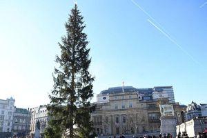 Cây thông Giáng sinh nổi tiếng nhất nước Anh bị chê thậm tệ