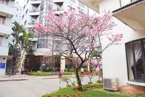 Tọa đàm về công tác chăm sóc và quản lý cây hoa anh đào tại Hà Nội