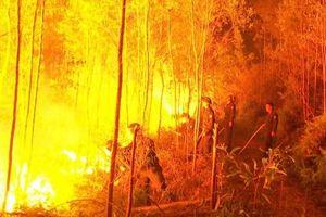 Xảy cháy rừng trên diện rộng tại Bắc Giang