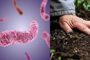 Mẫu đất tại gia đình có 3 trẻ tử vong chứa khuẩn Whitmore