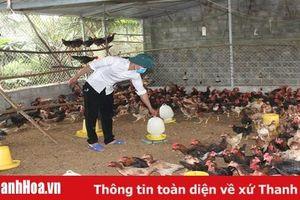 Xã Thọ Thanh chú trọng phát triển sản xuất, nâng cao thu nhập cho người dân