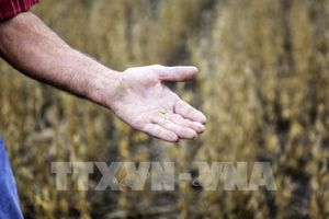 Điểm lại thị trường nông sản Mỹ tuần qua