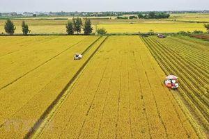 Quy định tập trung, tích tụ đất cho sản xuất nông nghiệp