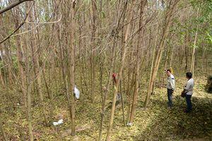 Quảng Ngãi điều tra xác định nguyên nhân cây cối bị khô héo hàng loạt