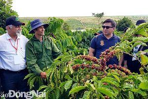 30 ngàn tấn cà phê được Nestlé chế biến tại Đồng Nai
