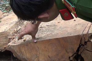 Xác định nhóm nghi can phá rừng đặc dụng Nam Kar