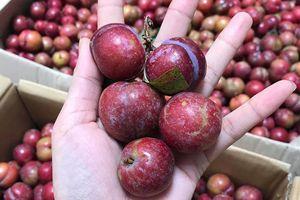 Mận trái mùa giá 'chát' rao bán đầy trên mạng, NTD coi chừng hàng Tàu