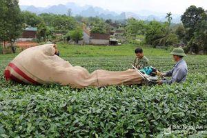 Nghệ An: Hơn 30 dự án, phi dự án của các tổ chức phi chính phủ nước ngoài tài trợ