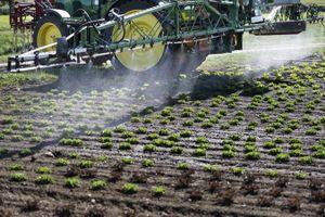 Thụy Sĩ cấm sử dụng thuốc trừ sâu chlorothalonil độc hại