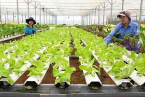 Hà Nội thành lập hội đồng thẩm định chương trình khuyến nông giai đoạn 2020 - 2025
