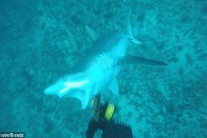 Hoảng hồn cá mập tấn công thợ lặn bất ngờ