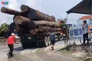 Đoàn xe 'vua' chở gỗ lộng hành trên Quốc lộ 1A ở Tiền Giang
