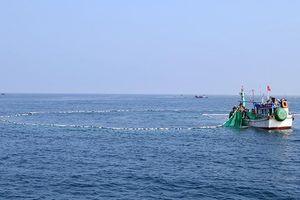 Quảng Ngãi phát triển kinh tế thủy sản bền vững