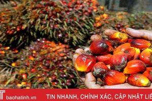 Indonesia khiếu nại lên WTO về chỉ thị hạn chế dầu cọ của EU