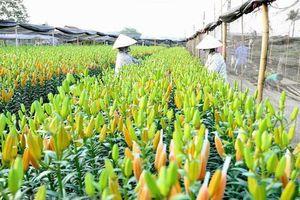 Làng hoa Tây Tựu - điểm du lịch muôn sắc hoa ở Hà Nội