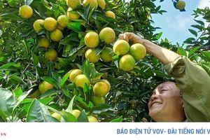 Sơn La đã có 18 sản phẩm nông sản được bảo hộ thương hiệu