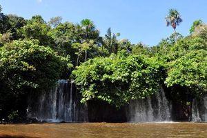 Phóng vệ tinh quan sát rừng Amazon