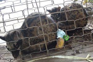 Cần 'mạnh tay' xử lý các đối tượng mua bán động vật hoang dã