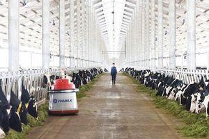 Chăn nuôi tìm hướng đi mới