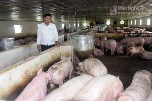Thanh Chương có đàn lợn nhiều nhất Nghệ An